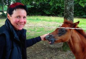 arabian endurence horses